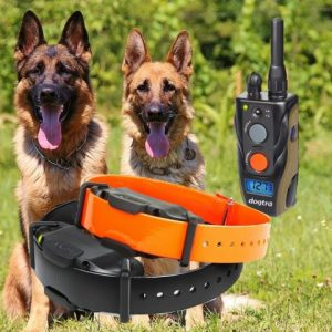 Best Remote Dog Training Collar -Dogtra2300