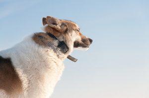 Best Dog Bark Collar Reviews -Dogtra YS300