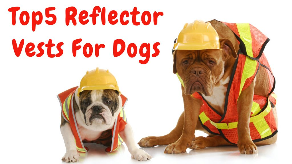 Best Reflector Vests For Dogs